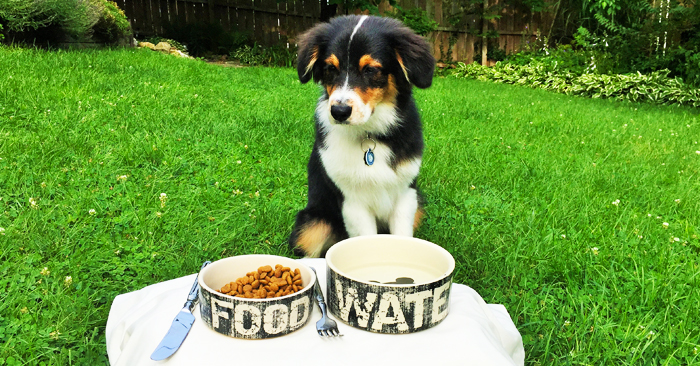 dog sitting on grass in front of food and water bowls