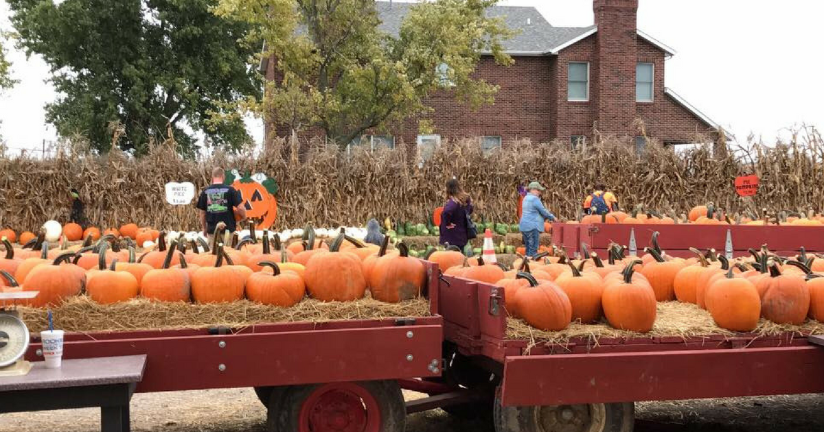 Relleke Pumpkin Patch