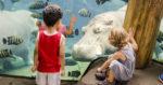 Saint Louis Zoo Coupon