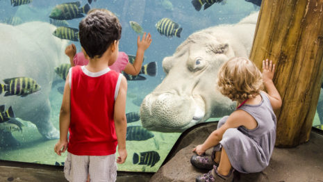 Saint Louis Zoo Coupon